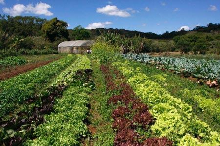Horta Orgânica da Fazenda Luiziânia (MG)