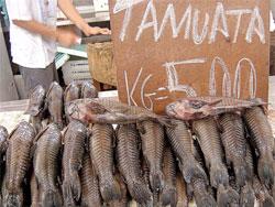 Tamuata (Foto: Neide Rigo/Come-se)