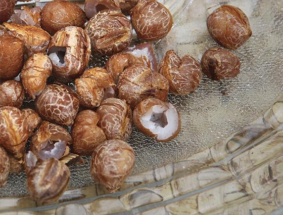 Amendoa de Licuri (Foto: Dodesign-s)