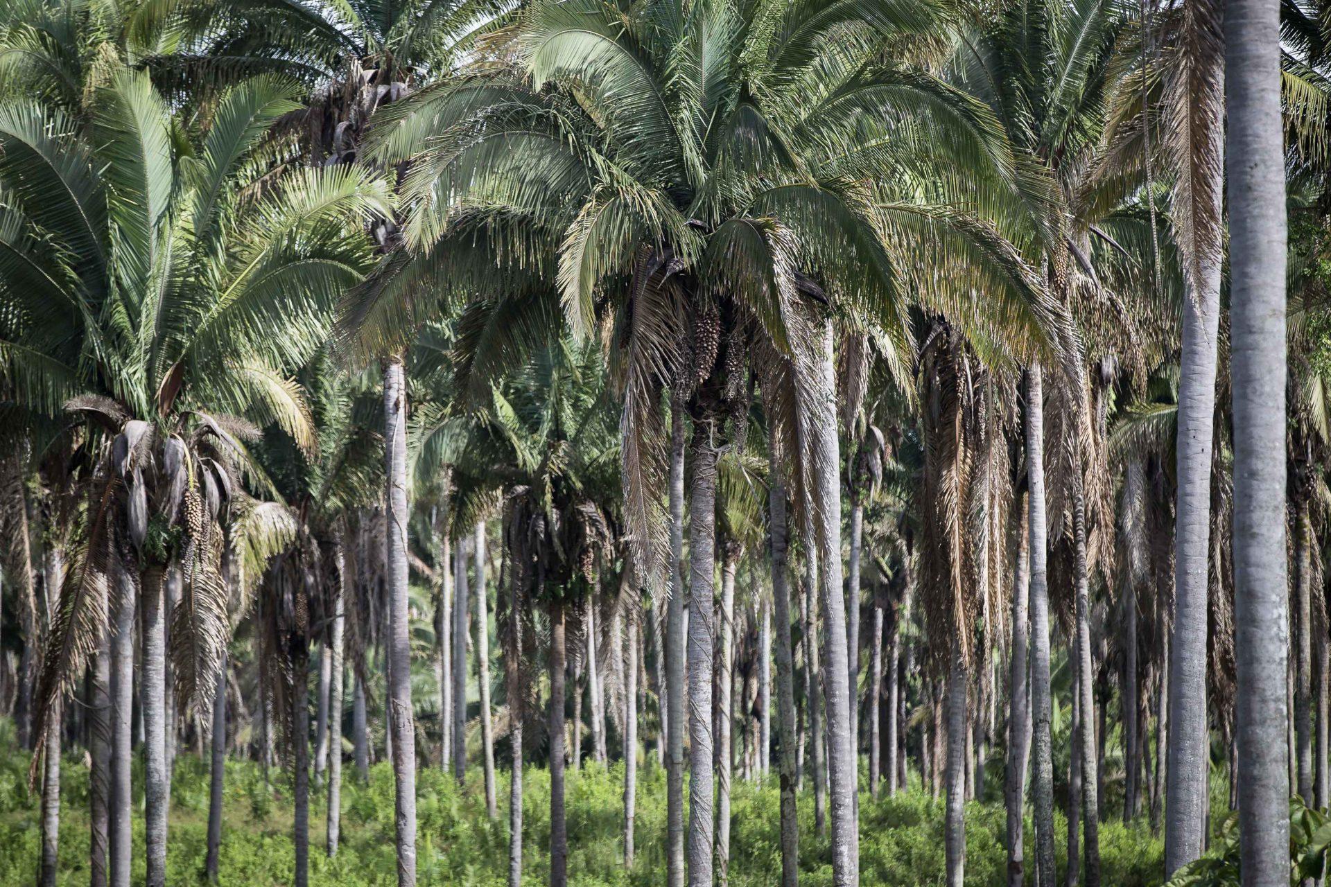baixa-20180505_Comunidade-Cajá_Quebradeiras-de-coco-babaçu_Dom-Pedro_Maranhão_TBauer-(3-de-3).jpg